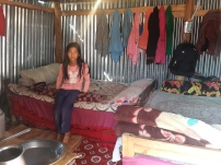 Homes after the earthquake - Zinc shelters